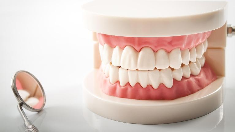 Model set of full dentures | Dentist Eagan MN 55122